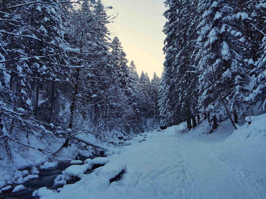 Dolina Olczyska w zimie