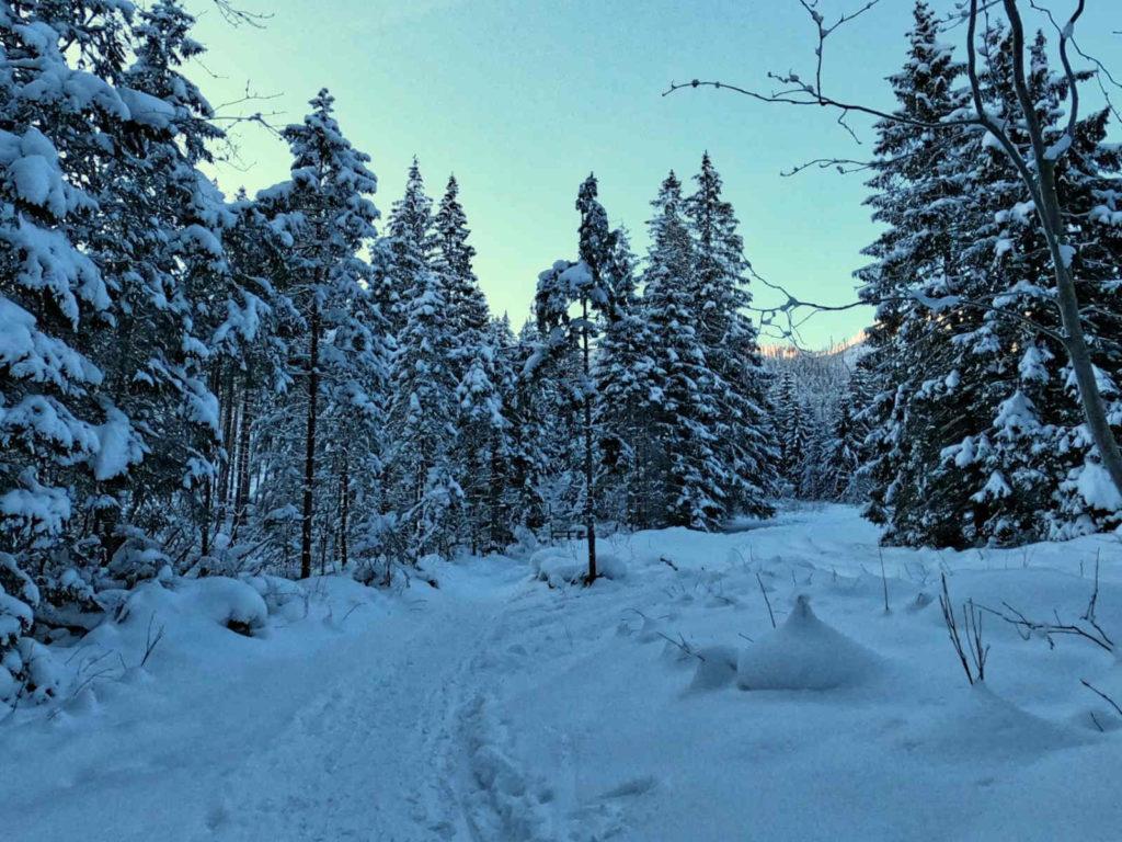 Szlak na Polanę Olczyską w zimie