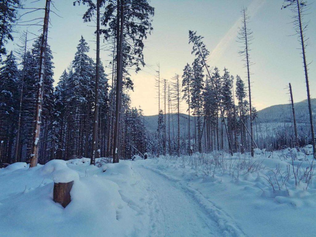 Szlak na Polanę Olczyską zimą