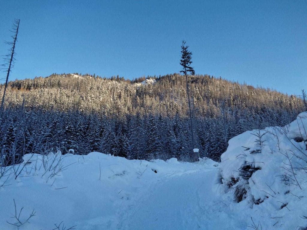 Szlak przez Dolinę Olczyską w zimie