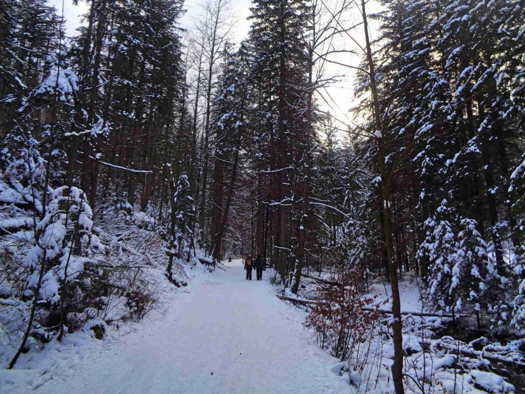 Dolina Strążyska w zimie