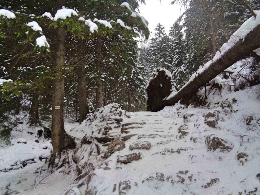 Siklawica, szlak zimą