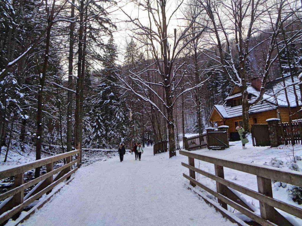 Zima w Dolinie Strążyskiej