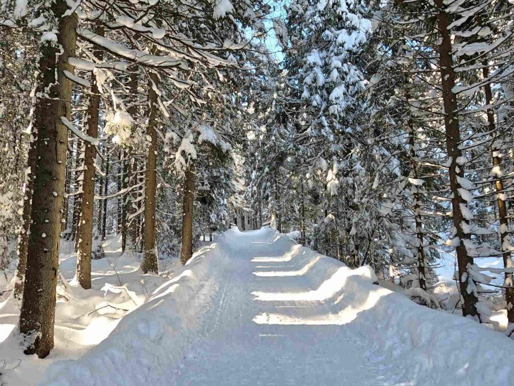 Czarny szlak z Brzezin w zimie
