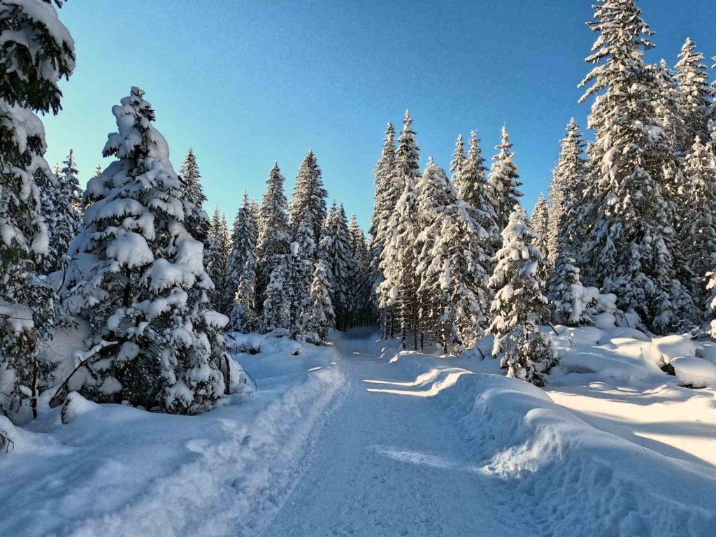 Czarny szlak z Brzezin zimą