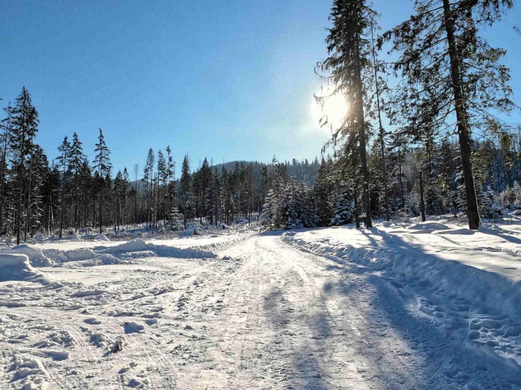Szlak z Brzezin zimą
