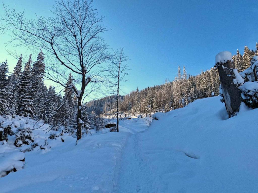Klasztor Albertynów, szlak w zimie