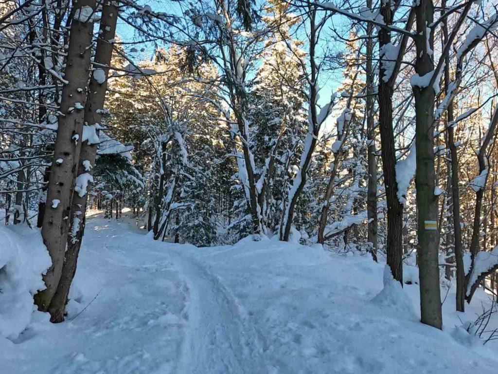 Klasztor Albertynów zimą