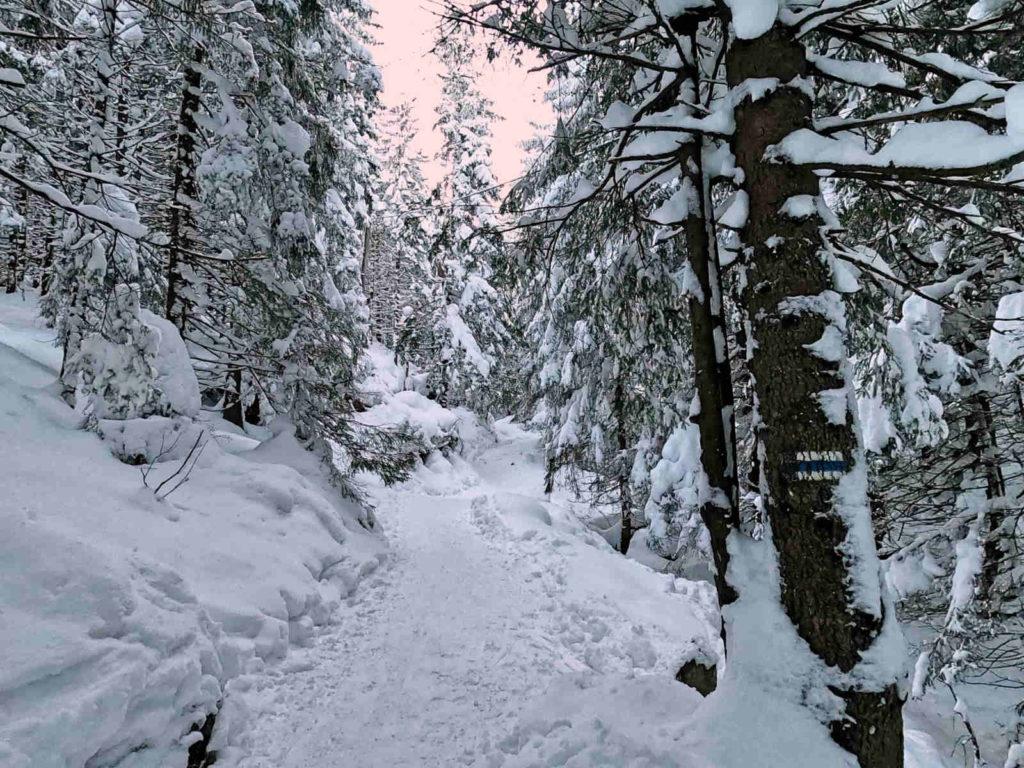 Szlak na Halę Kondratową w zimie