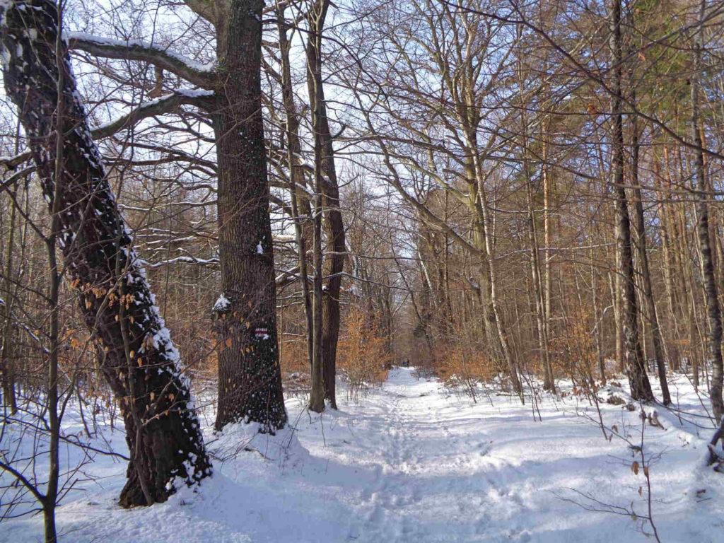 Ojcowski Park Narodowy, szlak czerwony