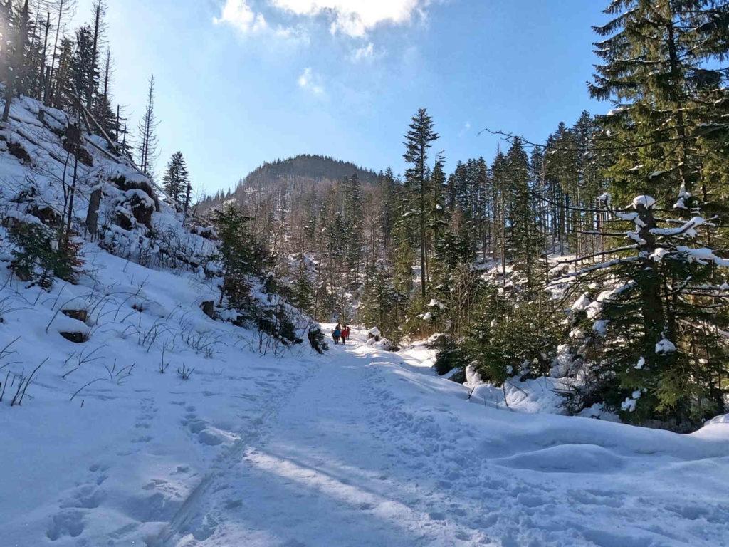 Dolina Małej Łąki w zimie