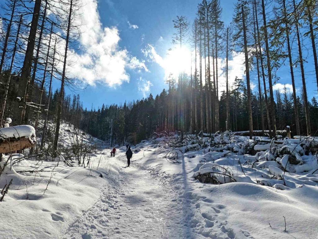 Dolina Małej Łąki w zimowych warunkach