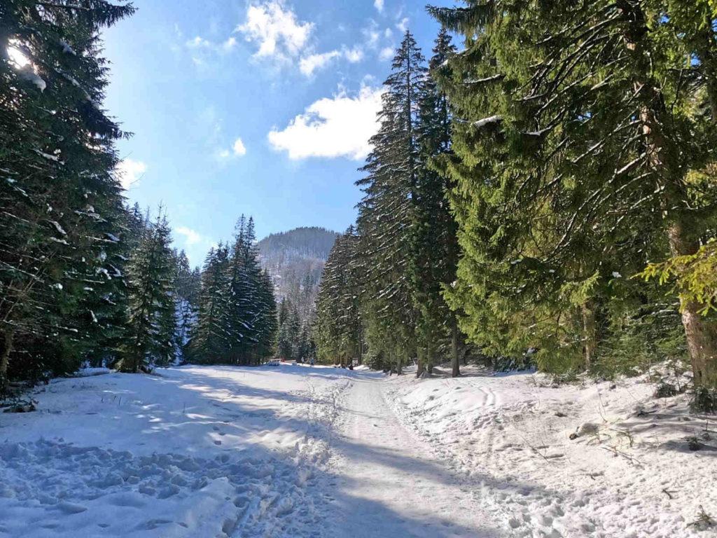 Dolina Małej Łąki zimą
