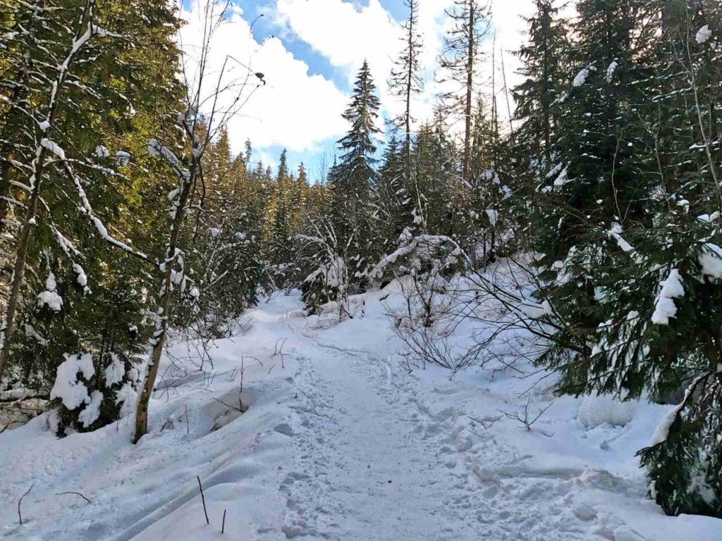 Zima w Dolinie Małej Łąki