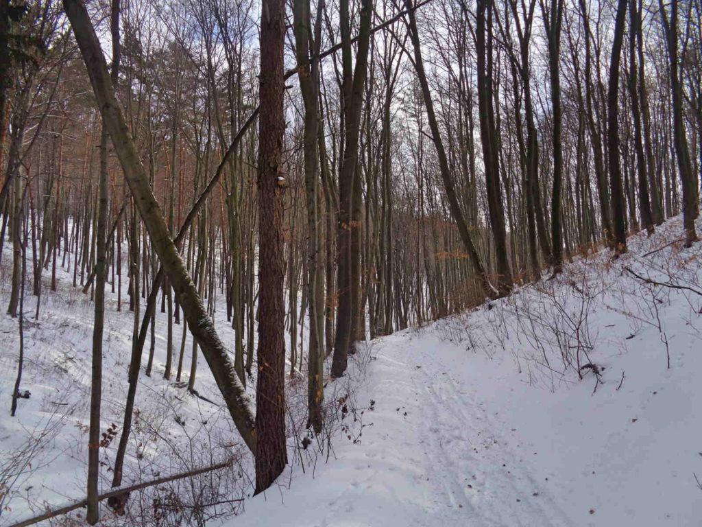 Dolina Racławki, czerwona ścieżka dydaktyczna