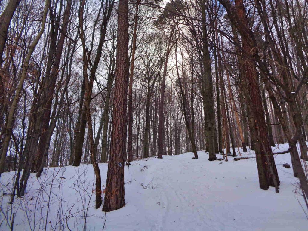 Dolina Racławki, niebieski szlak