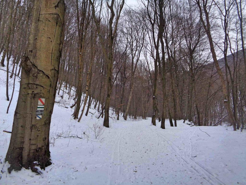 Szlaki w Dolinie Racławki