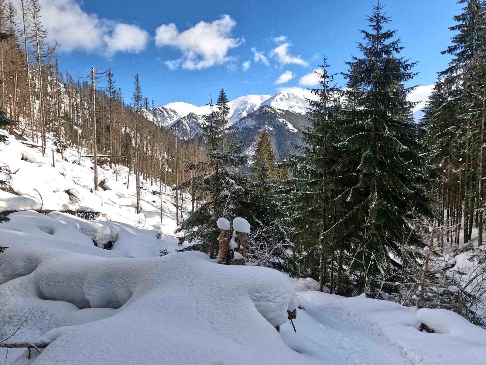 Iwaniacka Przełęcz od Doliny Kościeliskiej