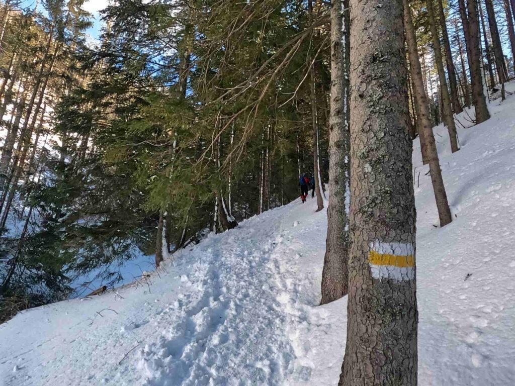 Iwaniacka Przełęcz, wejście od Doliny Chochołowskiej