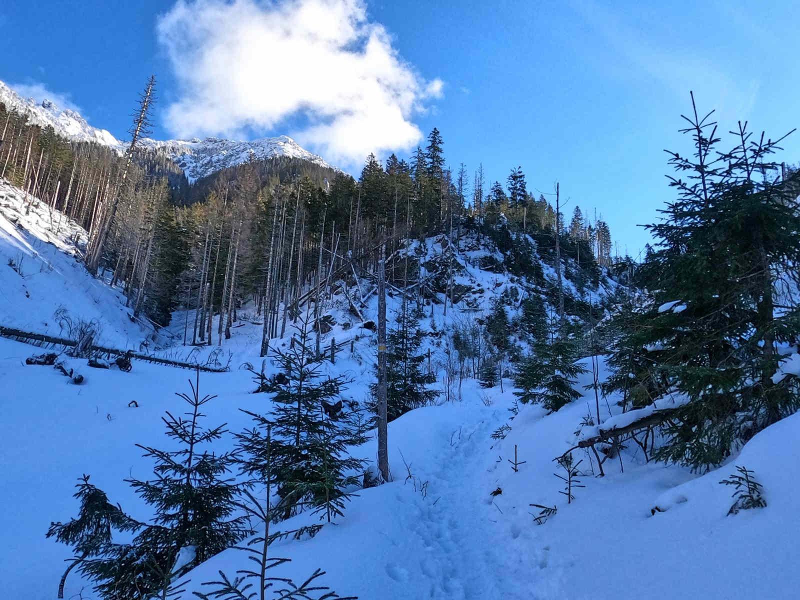 Iwaniacka Przełęcz, wejście z Doliny Chochołowskiej