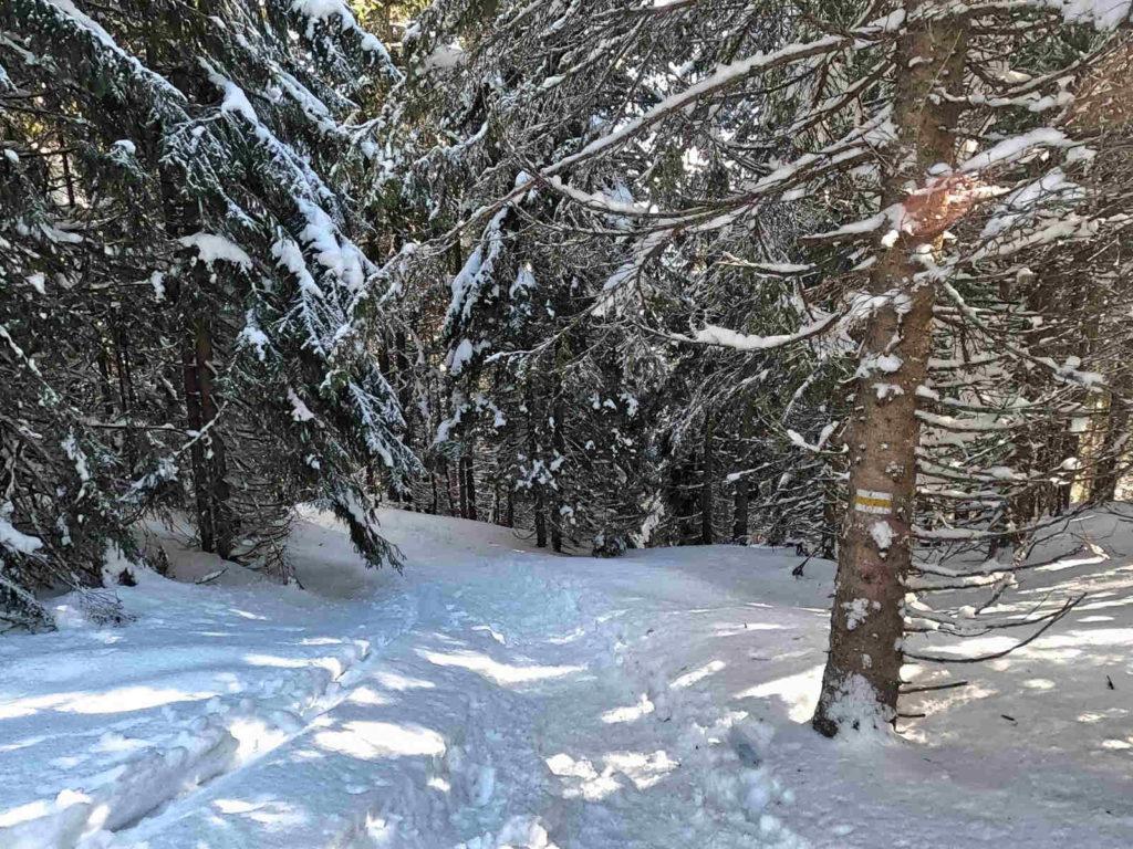 Iwaniacka Przełęcz z Doliny Kościeliskiej