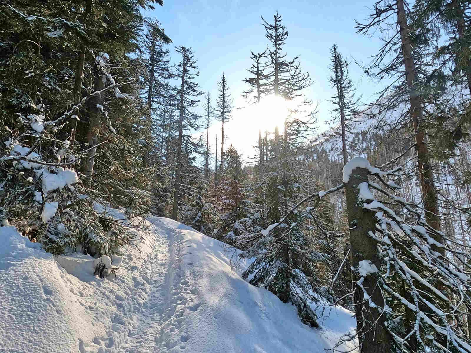 Szlak na Iwaniacką Przełęcz w zimie
