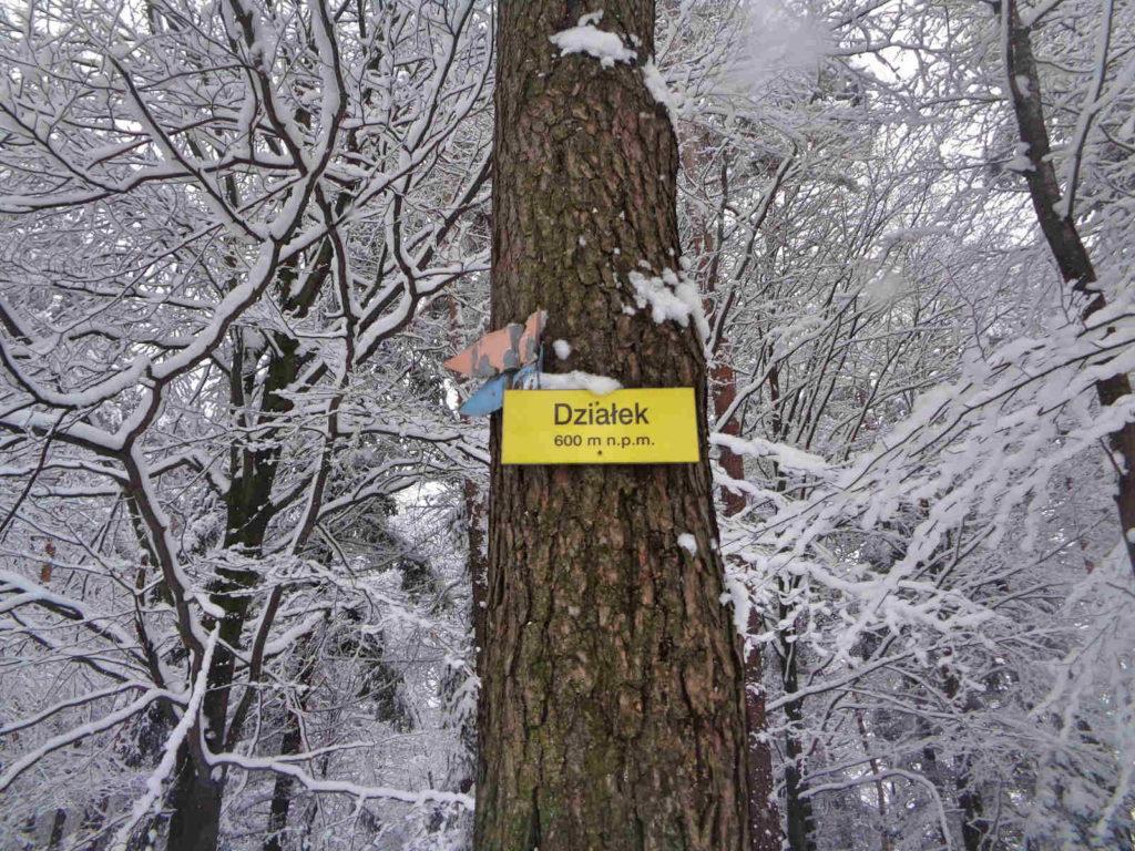 Działek zimą