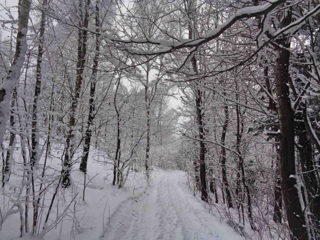 Kudłacze, czerwony szlak w zimie