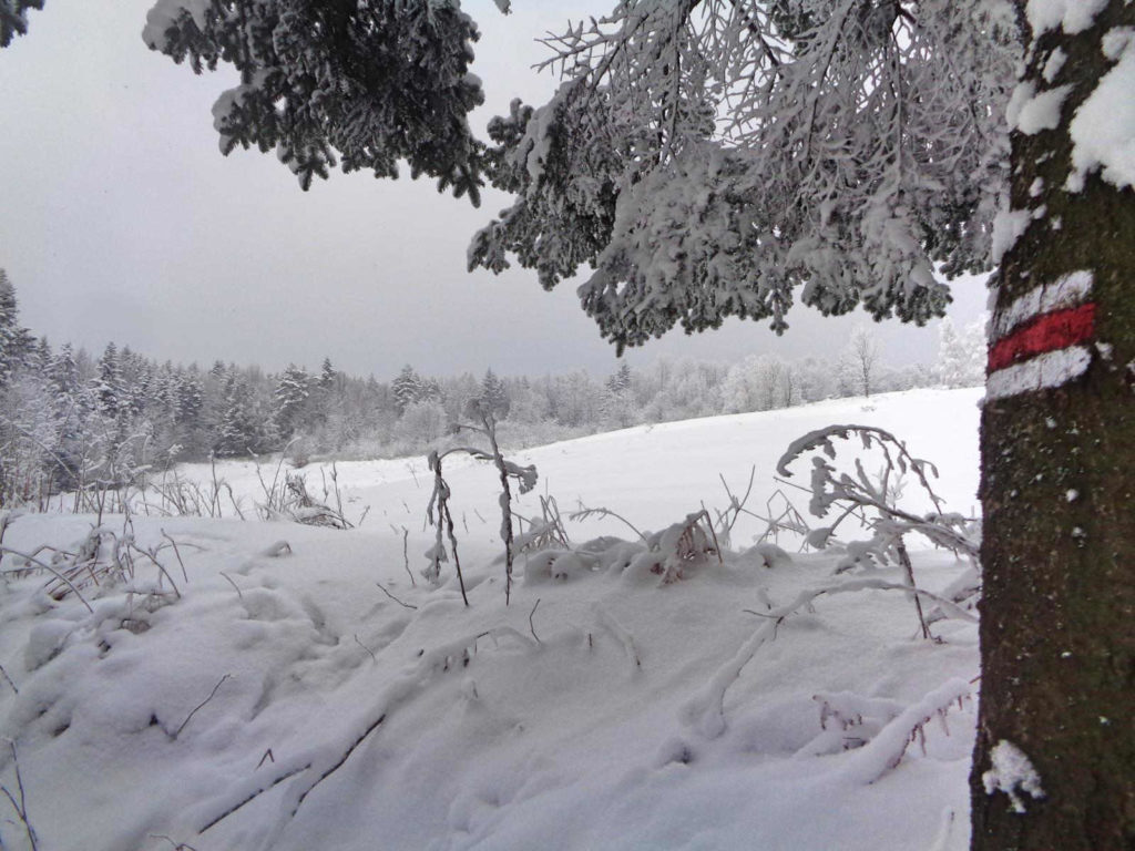 Kudłacze, czerwony szlak zimą