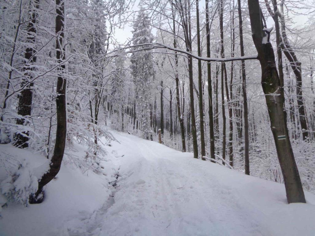Szlak Polana Sucha - Kudłacze