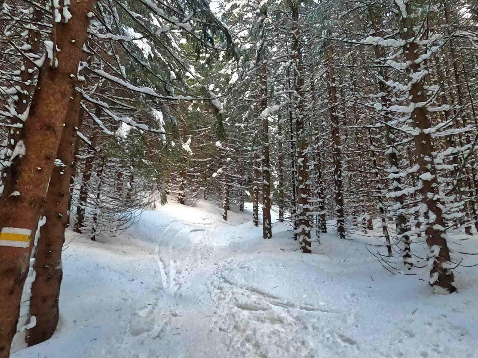 Kopa Kondracka, żółty szlak w zimie