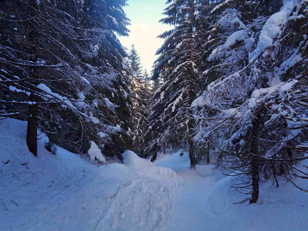 Niebieski szlak na Halę Kondratową