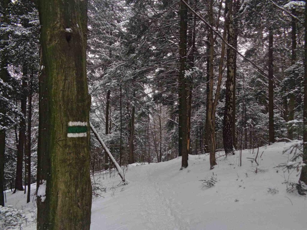 Góra Chełm, zielony szlak zimą