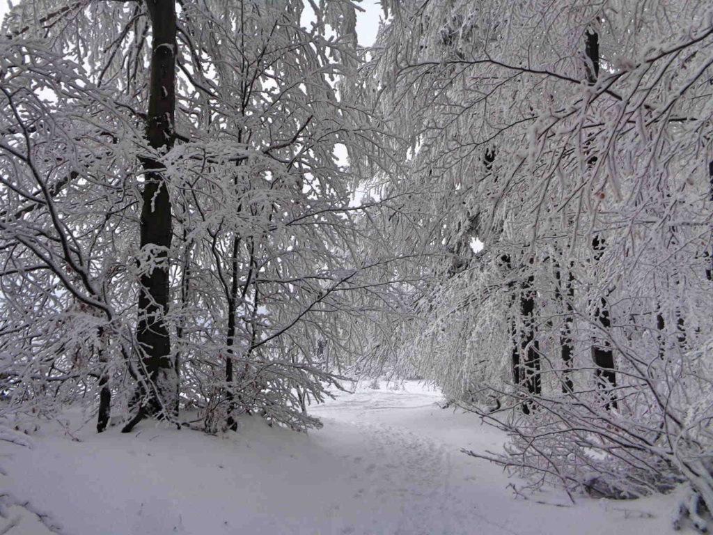 Uklejna, czerwony szlak zimą