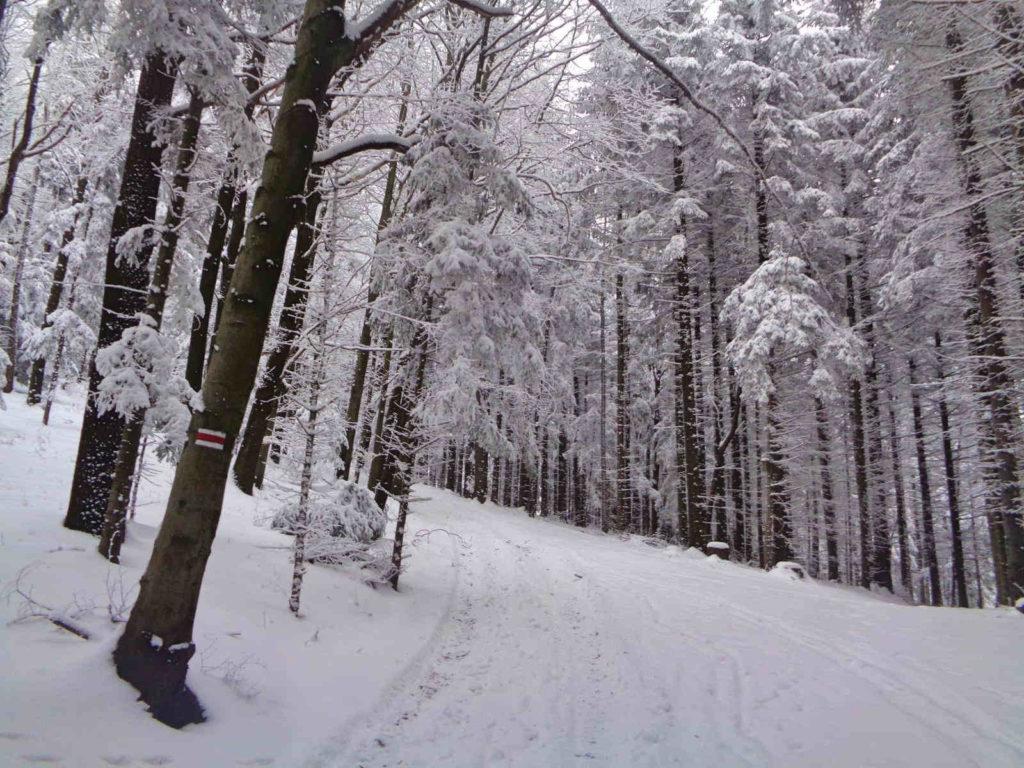 Uklejna, wejście w zimie