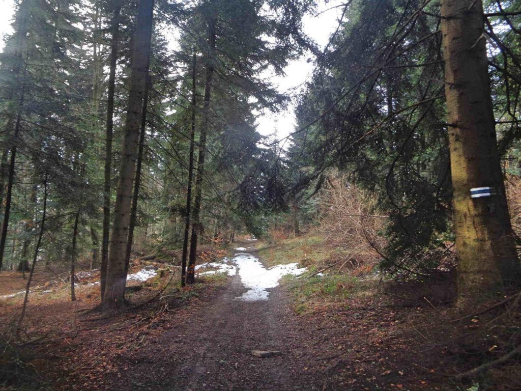Ciecień, szlak z Wierzbanowej