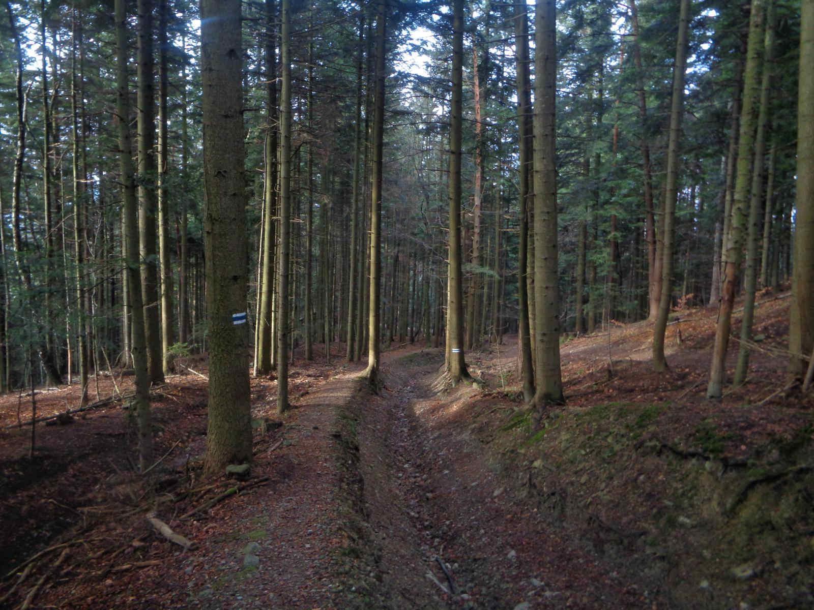 Ciecień, szlak z Wierzbanowskiej Przełęczy