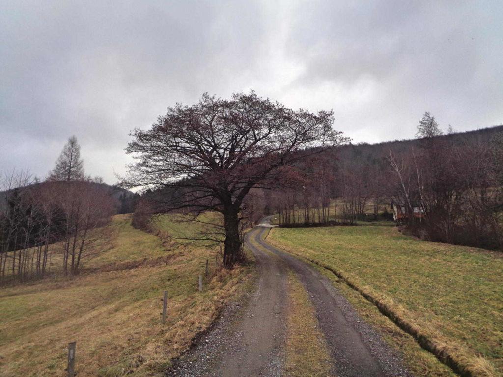 Ciecień, szlak z Wiśniowej
