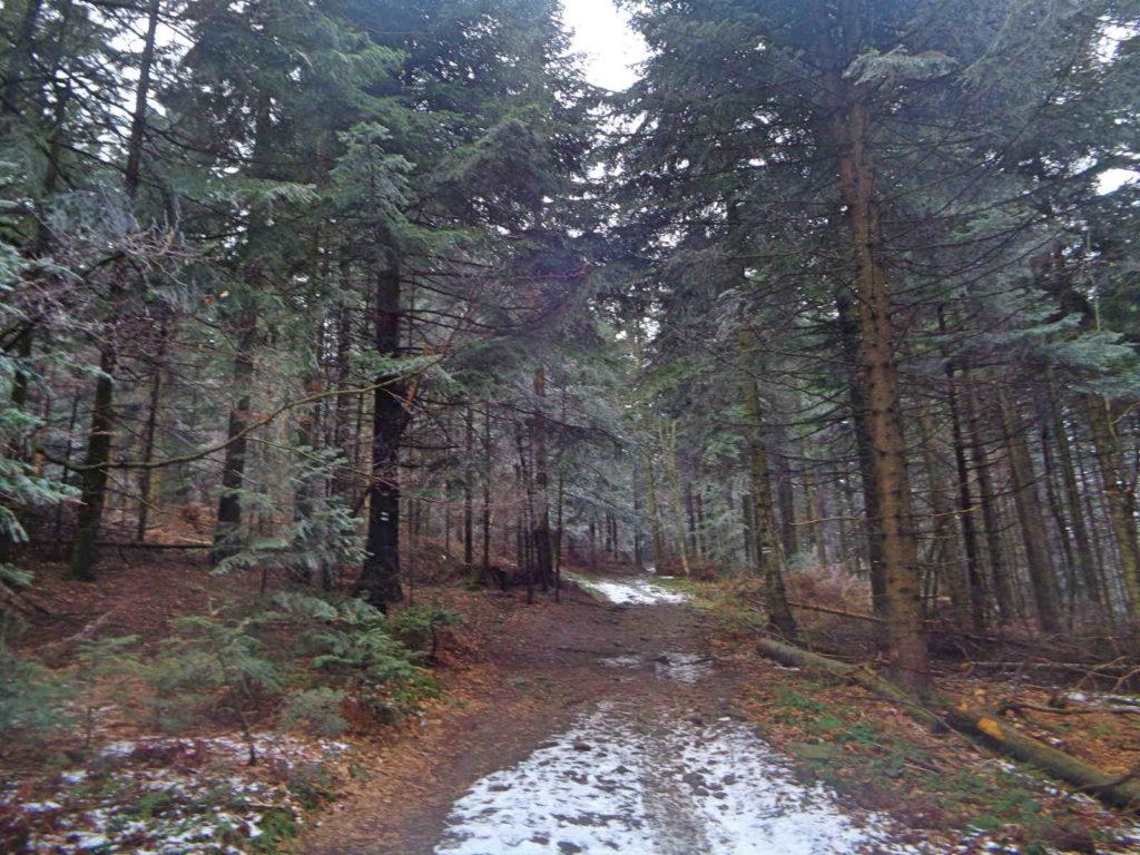 Ciecień, wejście zielonym szlakiem