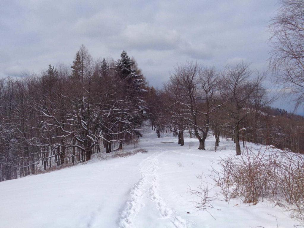 Kiczera, żółty szlak w zimie