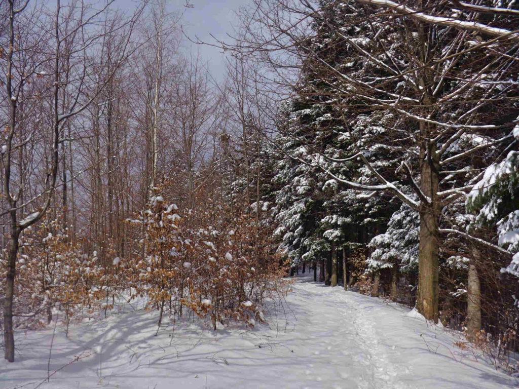 Kiczera, żółty szlak zimą