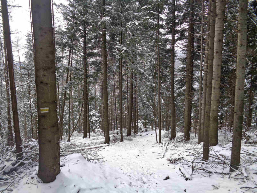 Szlak Kiczera - Porąbka zimą