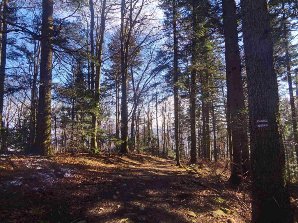 Lubomir, zejście zielonym szlakiem