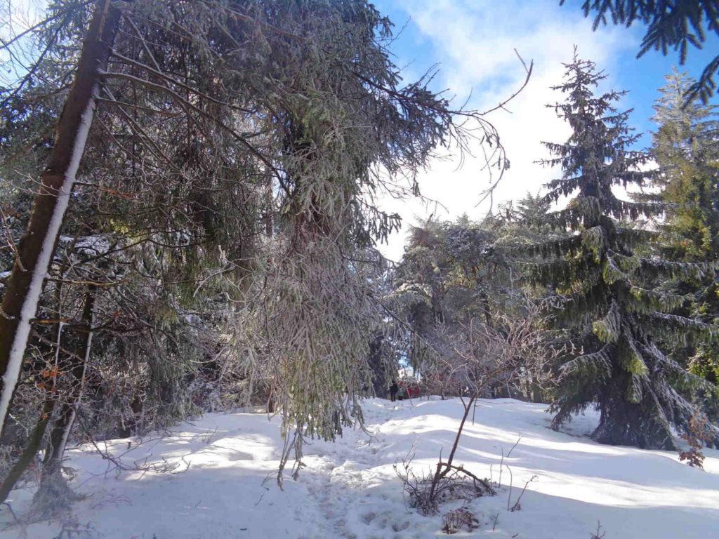 Wejście na Lubomir od Wiśniowej
