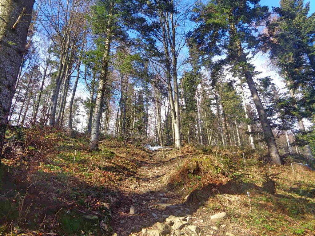 Wejście zielonym szlakiem na Lubomir