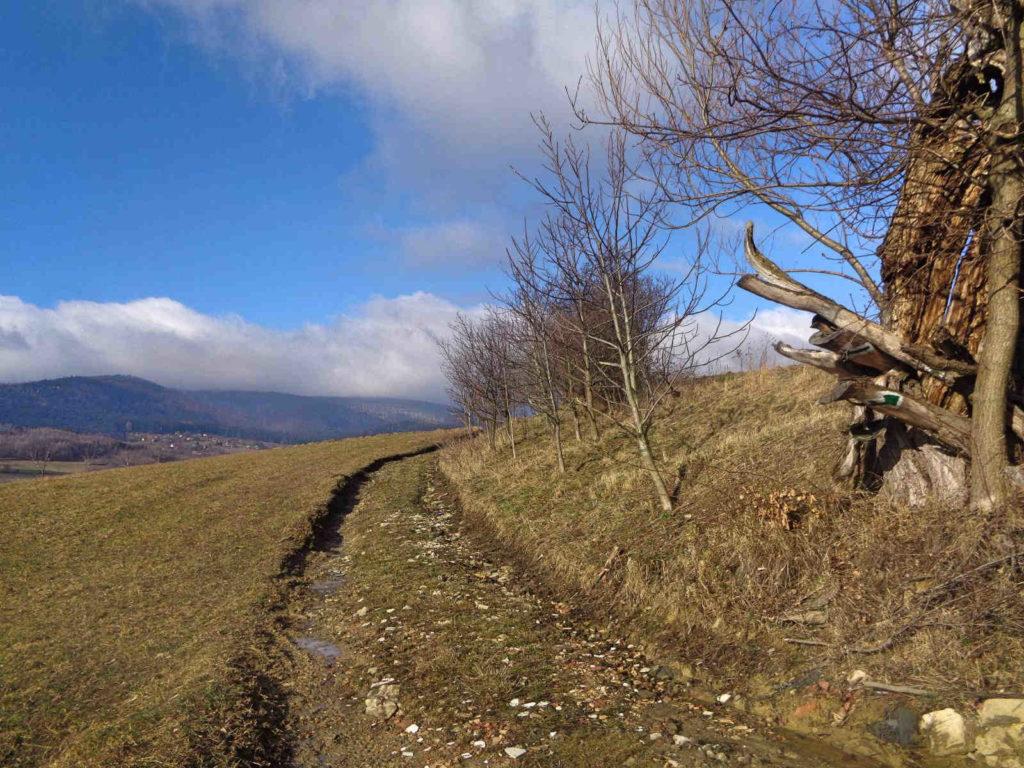 Wiśniowa, szlak zielony