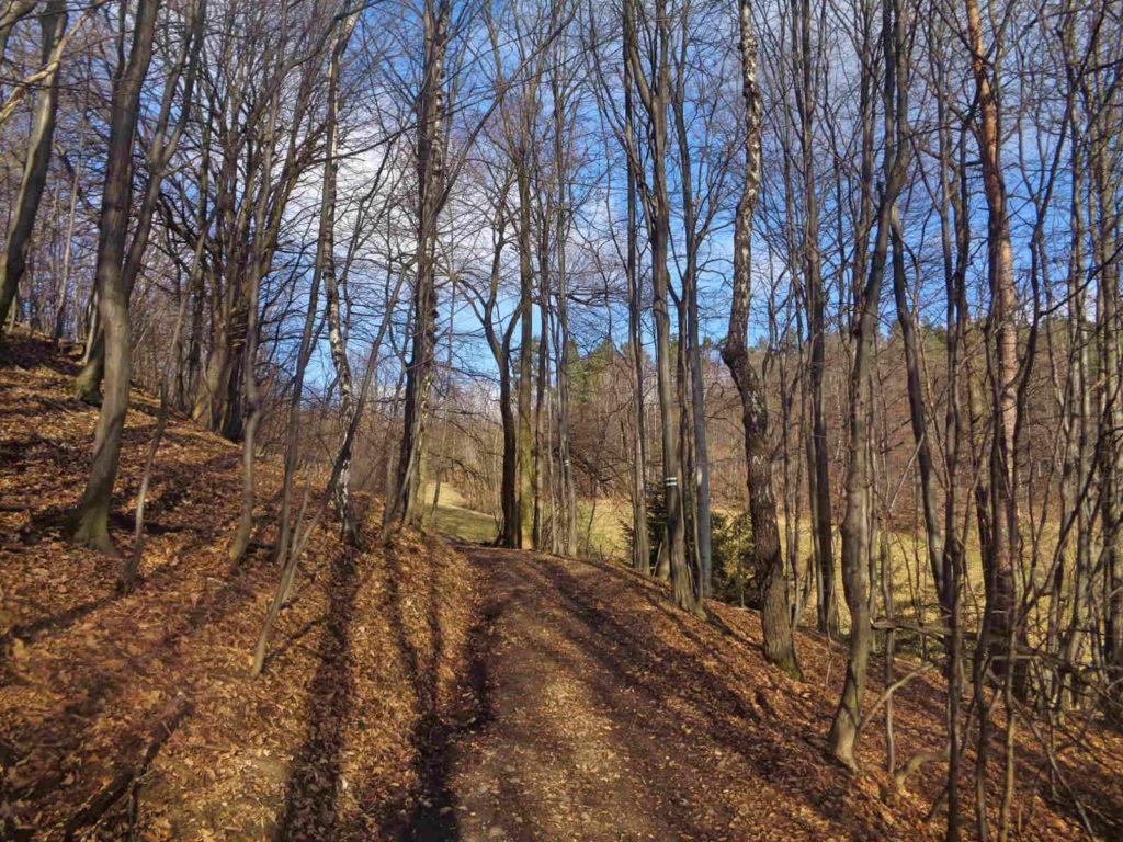 Wiśniowa, zielony szlak