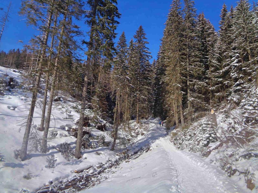 Szlak na Grzesia zimą