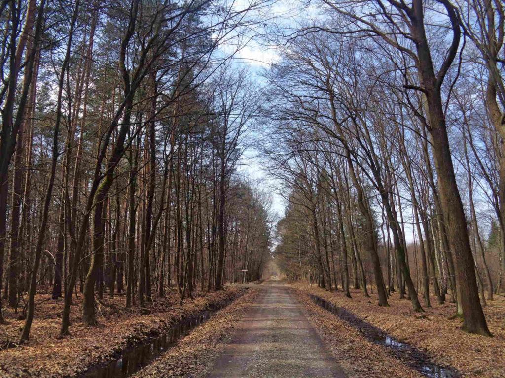 Puszcza Niepołomicka, czerwony szlak Żeleńskich