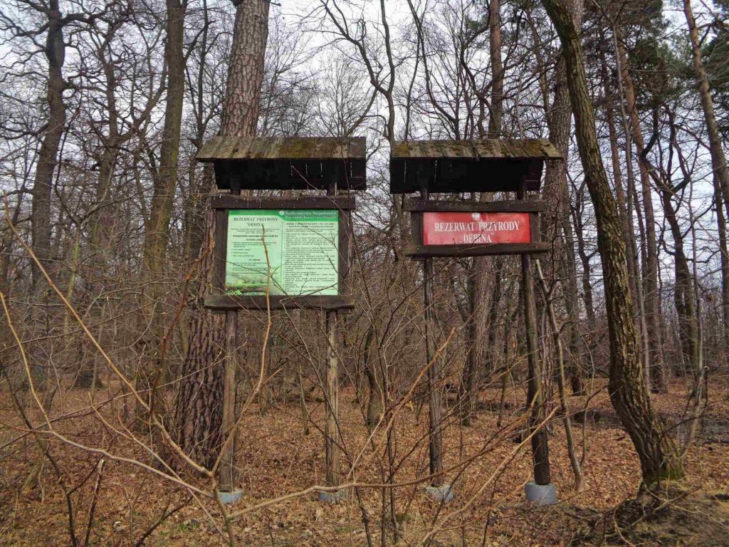 Puszcza Niepołomicka, Rezerwat Dębina